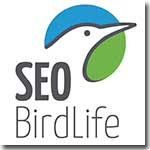 SEO-Bridlife