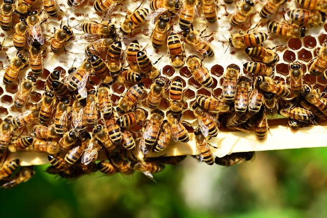 las abejas están siendo asesinadas por la acción humana