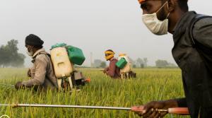 trabajadores cultivos india