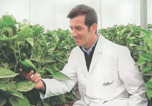 articulo pesticidas