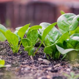 La producción y alimentación ecológica se da a conocer en colegios catalanes
