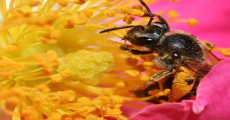 Reino Unido respalda la prohibición de pesticidas dañinos para las abejas