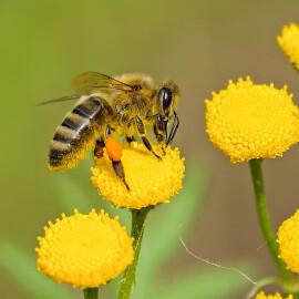 Mueren más de 500 millones de abejas en Brasil en tres meses, y la razón es un peligro para el planeta