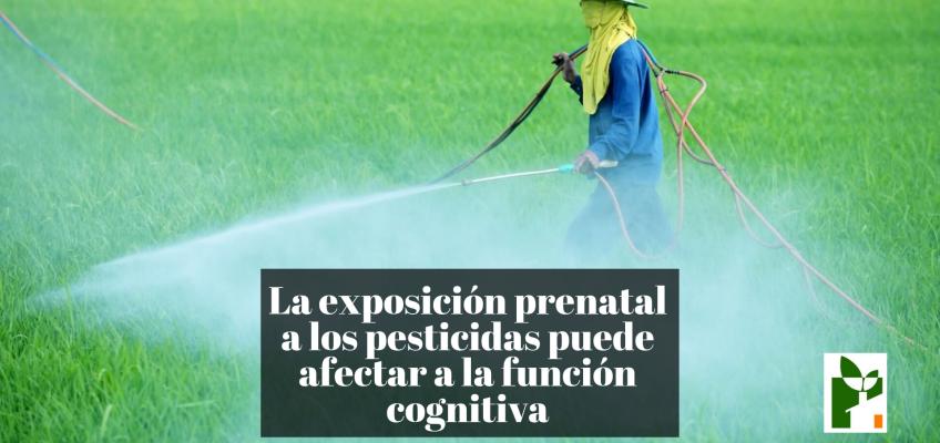 La exposición prenatal a los pesticidas puede afectar a la función cognitiva