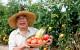Nipón tomatero