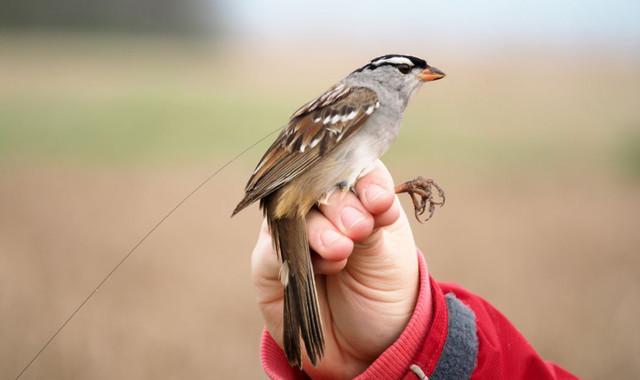 Los-insecticidas-amenazan-la-supervivencia-de-las-aves-silvestres_image_380