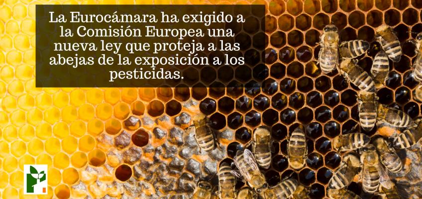 La Eurocámara exige proteger a las abejas de la exposición a los pesticidas